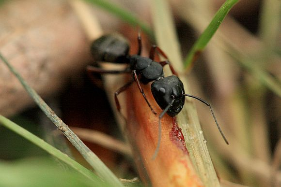 Protect Your Home From Carpenter Ants