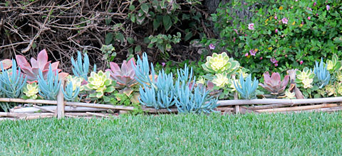 Bamboozled? Turn Excess Cuttings into an Ornamental Border