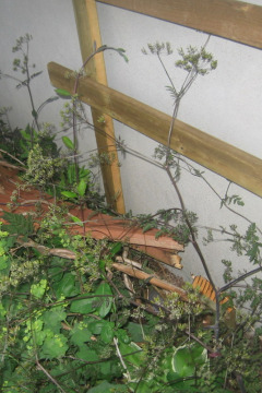 Build a Wooden Trellis for Cheap and Save That Vine