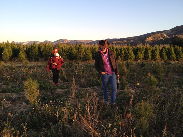 christmas tree farm How to Choose a Christmas Tree Farm