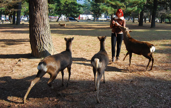 deer nara japan Praying for Japan