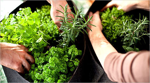herb container garden Growing Herb Container Gardens