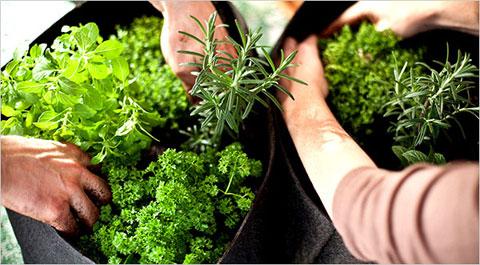 herb-container-garden.jpg
