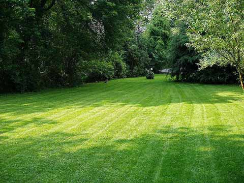 lawns pros pga Lawn Tips From a Pro PGA Greenskeeper