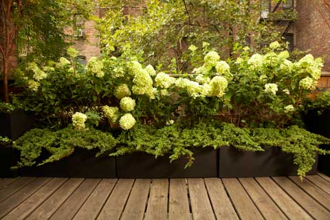 new york garden 3 Simple Steps to Patio Appeal