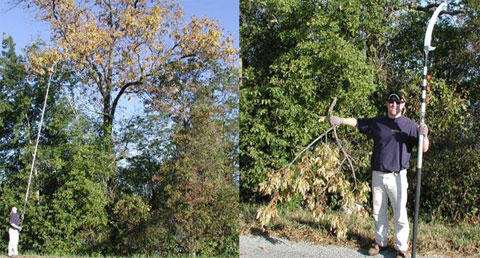 Troubleshooting Tree Limbs