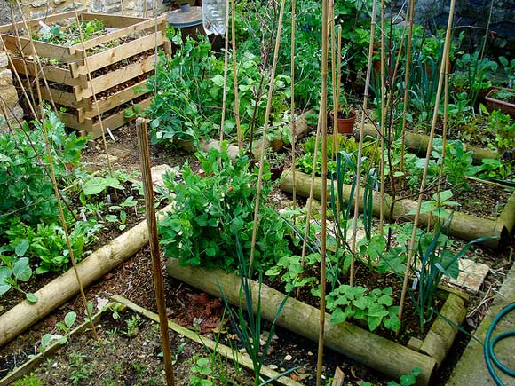 prepare garden winter 10 Tips to Prepare Your Garden for Winter