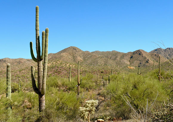 Why I Love Tucson, Arizona