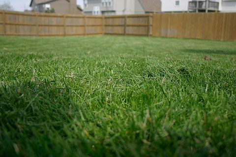 From Fescue to St. Augustine, Which Lawn Grass is Best for You?